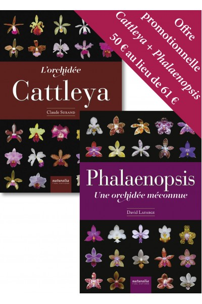 Offre promotionnelle Cattleya + Phalaenopsis